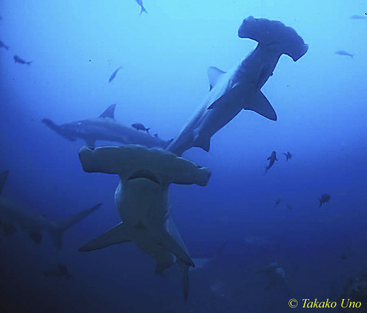 Diving For Fun - Dive Trip - Shark Watching Charter