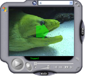 Video - Green Moray Eel