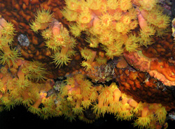 Photoshop Elements I - Blooming Soft Coral
