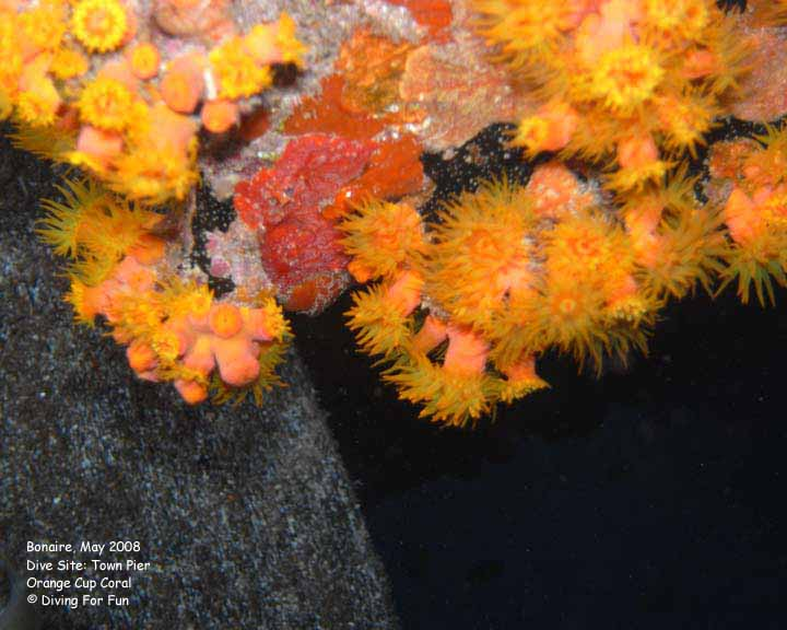 Photoshop Elements II - Blooming Soft Coral